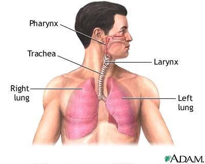 Lung Transplants: Advances